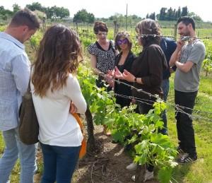 degustare vino nobile montepulciano