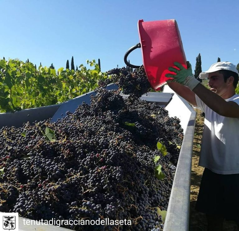 #VINONOBILE – WINE PICS OF THE MONTH: SEPTEMBER